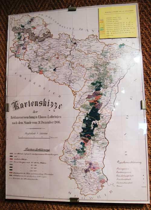 La carte de la progression du phylloxera dans le vignoble alsacien. Cette s'est implantée suite à l'introduction en Europe de plants de vigne américains, infestés par des pucerons du phylloxera. L'infection d'un cep entraîne sa mort en trois ans. Apparu en Alsace, en 1876, chez un pépiniériste à Bollwiller, le fléau se propage rapidement et en 1893, 370 ha de vignes sont infectés dans le Haut-Rhin. En 1911, ce sont 4 429 ha et les autorités allemandes procèdent à la destruction des vignes touchées, avec désinfection du terrain, laisé en frichre pendant 5 ans. La vigne ne peut y être replantée qu'au bout de 10 ans. Cette crise du phylloxéra marque la disparition du vignoble de plaine en Alsace : sur les collines de Rixheim, les parcelles de vignes reculent fprtement et là où on replante c'est une variété de vins hybrides, encore connus par les anciens Rixheimois. Dès 1898, les vignobles de Habsheim de Rixheim sont touchés par cette maladie.