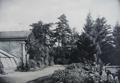 Une vue des serres, extrait de l'album de 1907.