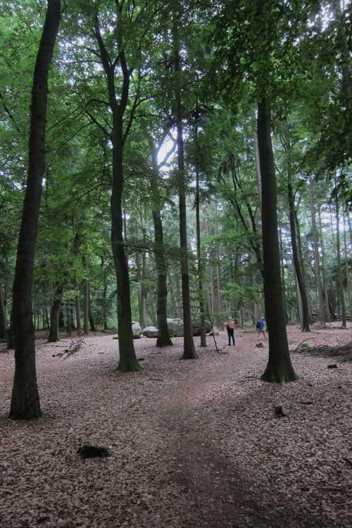 Ces mégalithes reposent dans une magnifique forêt.