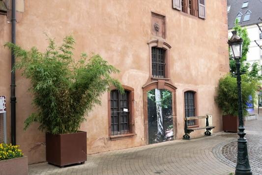 Une des façades de l'Ancienne Douane est orné de l'emblème de Haguenau (la rose quintefeuille) et d'une photo d'arbre. Ces images d'arbres disséminées dans la ville des de