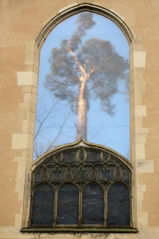 La façade arrière du Musée est aussi orné d'une phtographie d'arbre.